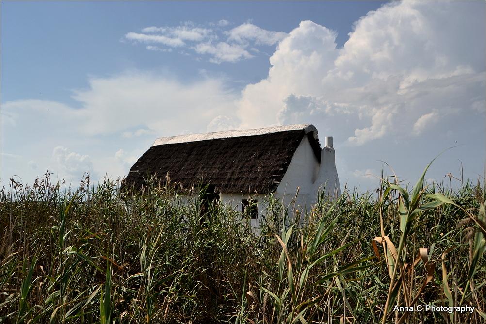 La petite maison dans les roseaux