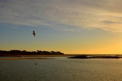 Vol dans le soleil couchant