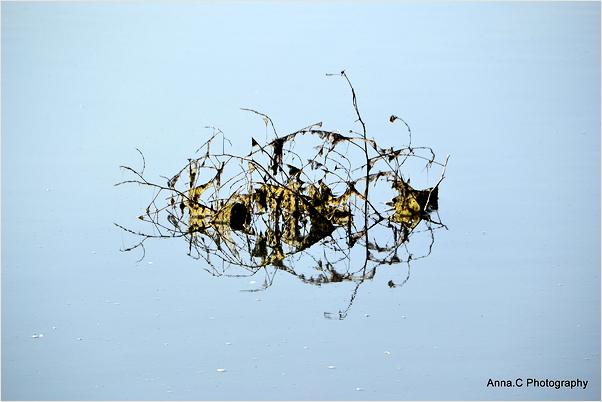 Sculpture végétale sur l'eau