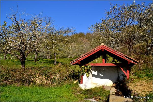 Les cerisiers en fleurs d'Itxassou #5 et le lavoir