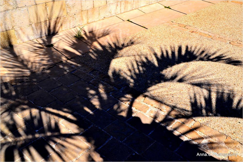 A l'ombre des palmes