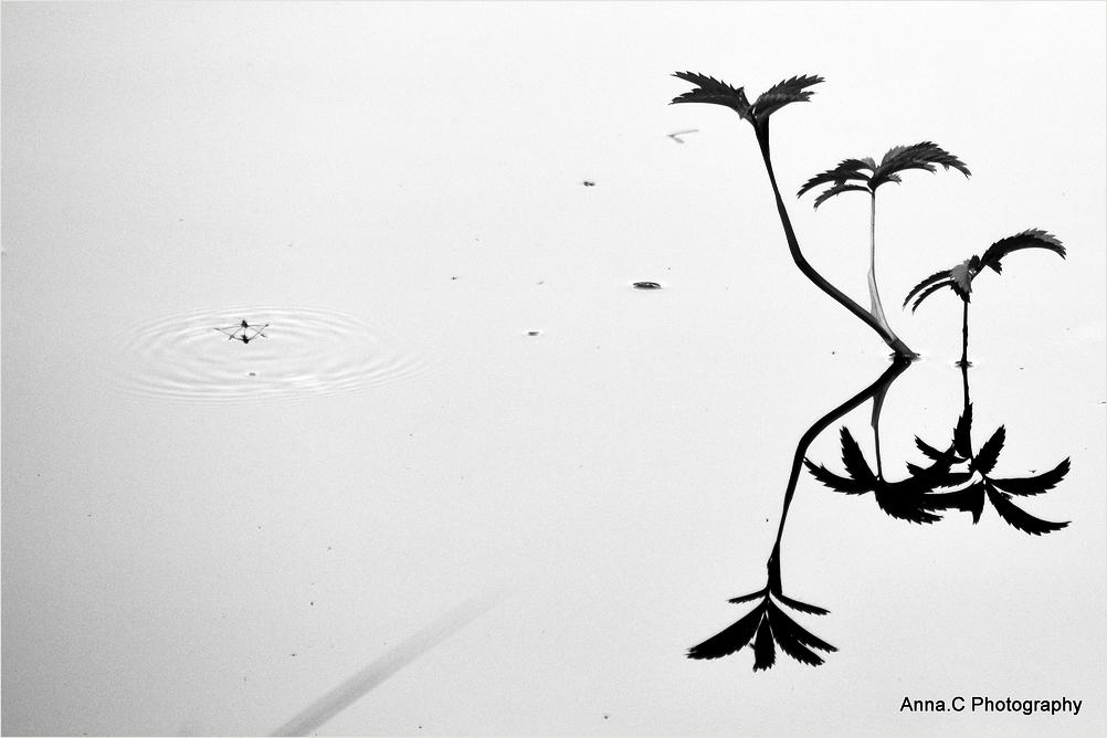 Haiku sur l'étang