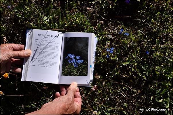 Leçon de botanique
