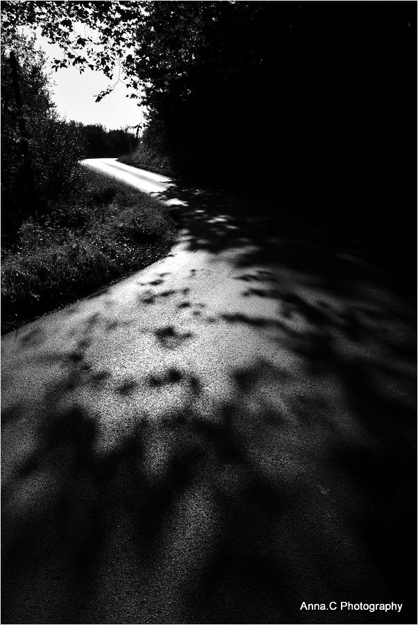 La petite route ombragée