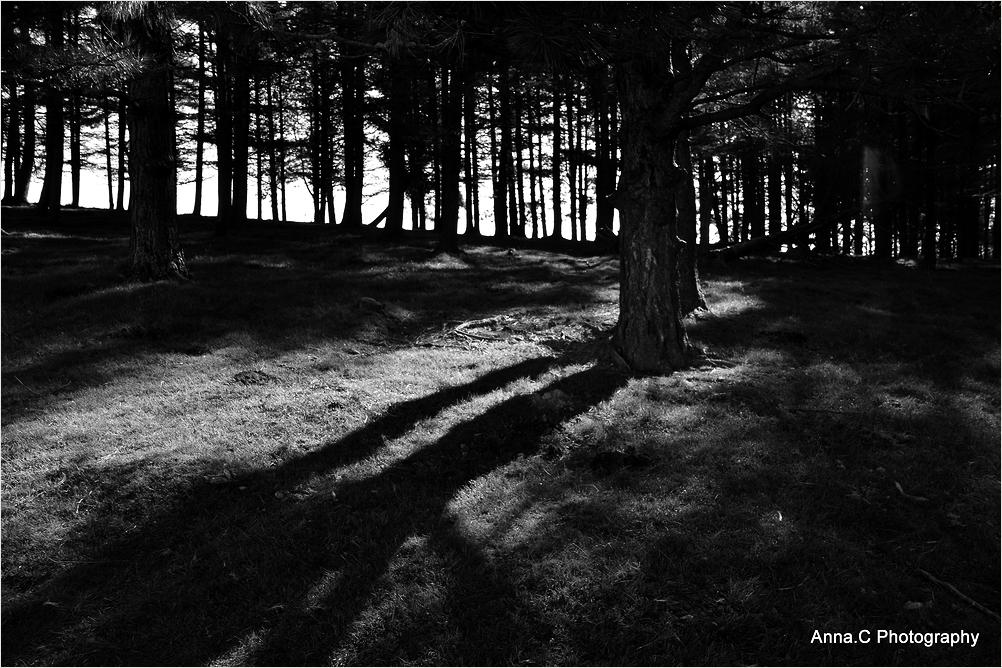 A l'ombre de la forêt de pins #1