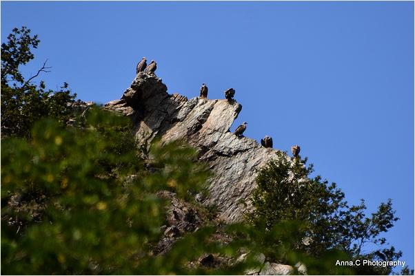 Les vautours guettent