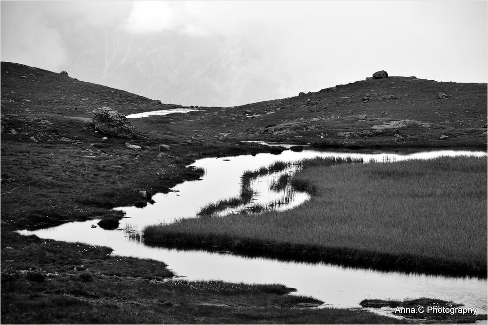 Wet meadows