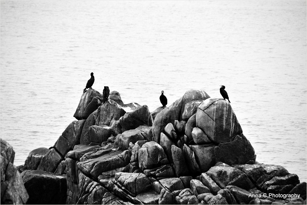 L'ilôt aux cormorans
