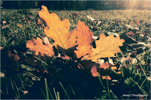 Last autum leaves