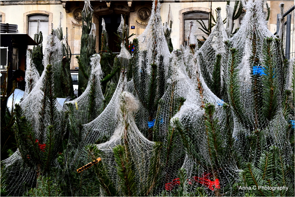 Christmas trees in the nets