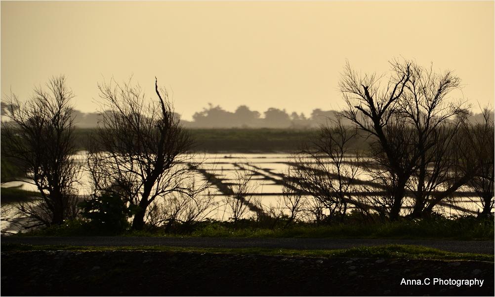 Matin brumeux sur les marais de l'île