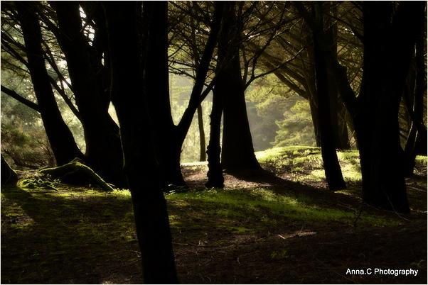 Sous les arbres #1
