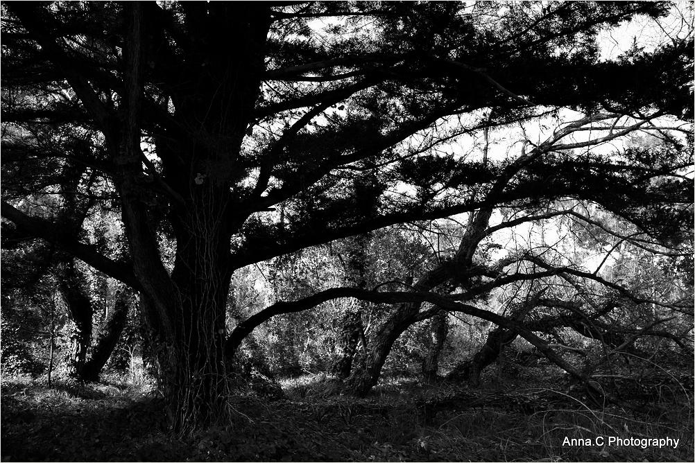 Sous les arbres #2