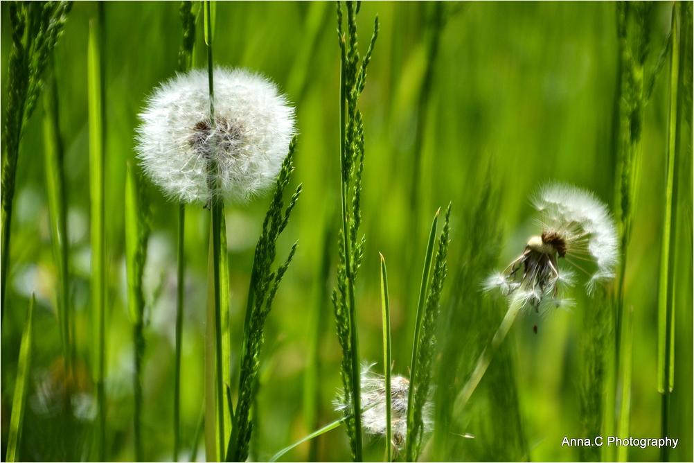 Dans les herbes