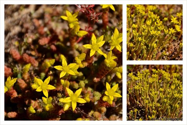 Tapis jaune/ yellow carpet