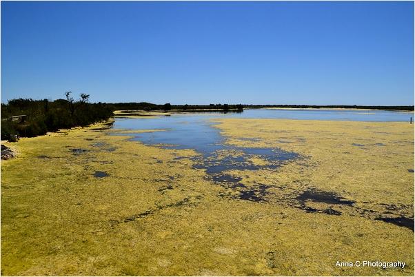 Les couleurs du marais