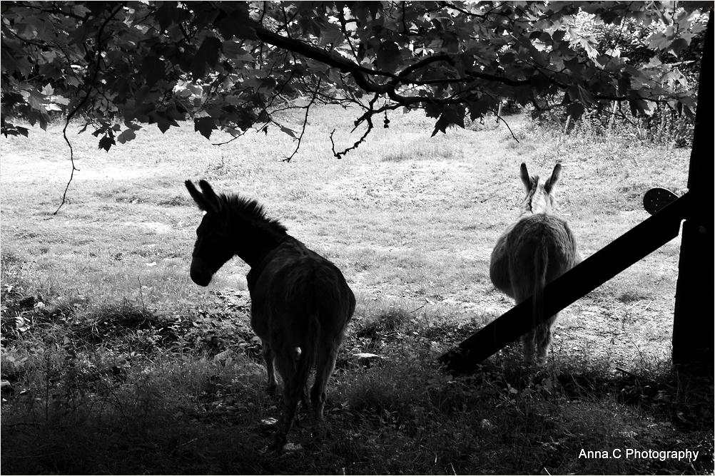 J'aime l'âne si doux...