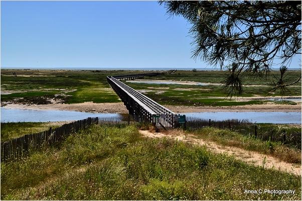 La traversée du marais