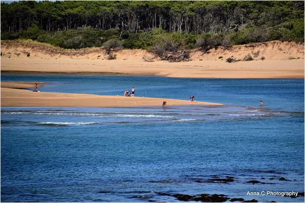 Les bancs de sable de l'estuaire