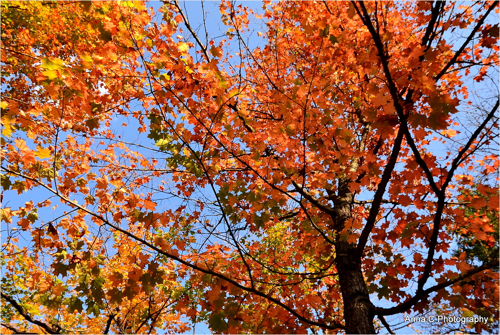 Vibrant colours of Canadian autumn