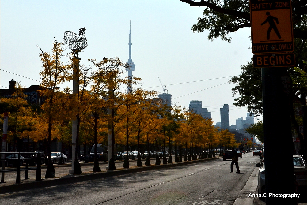 Autumn colors in Spadina Ave