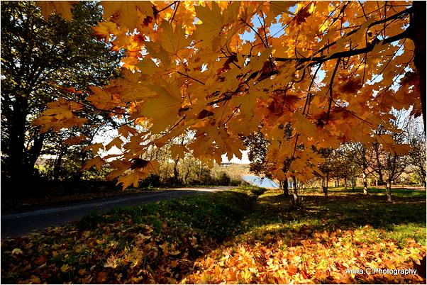 Sous les feuilles d'or