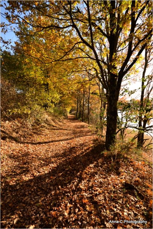 Chemin de feuilles