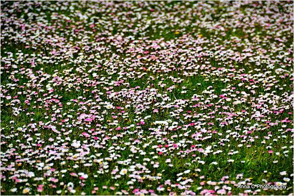 Tapis floral printanier