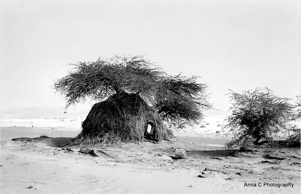La cabane ombragée