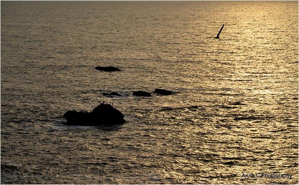 Ocean and rocks - Memorial