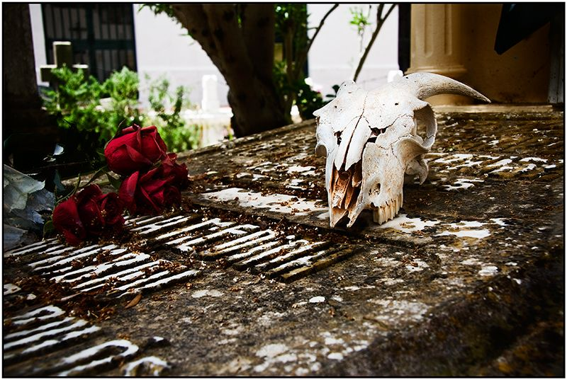 Foto·al·vers (ses meves fotos )  Maig 2008 II