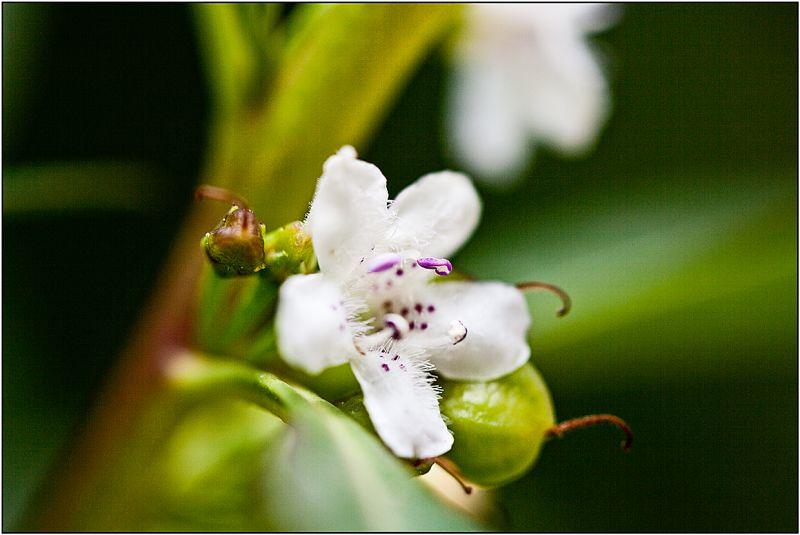 Una petita flor per a tu