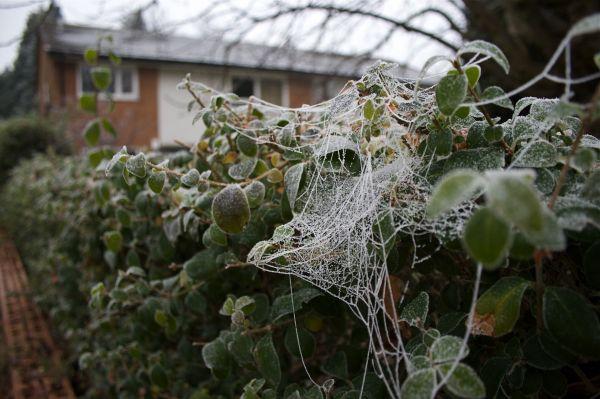 birmingham cold snap