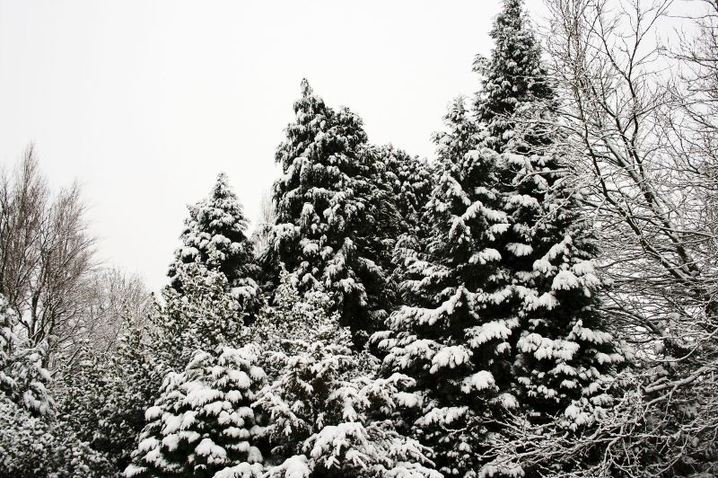 Trees, Birmingham, snow, winter