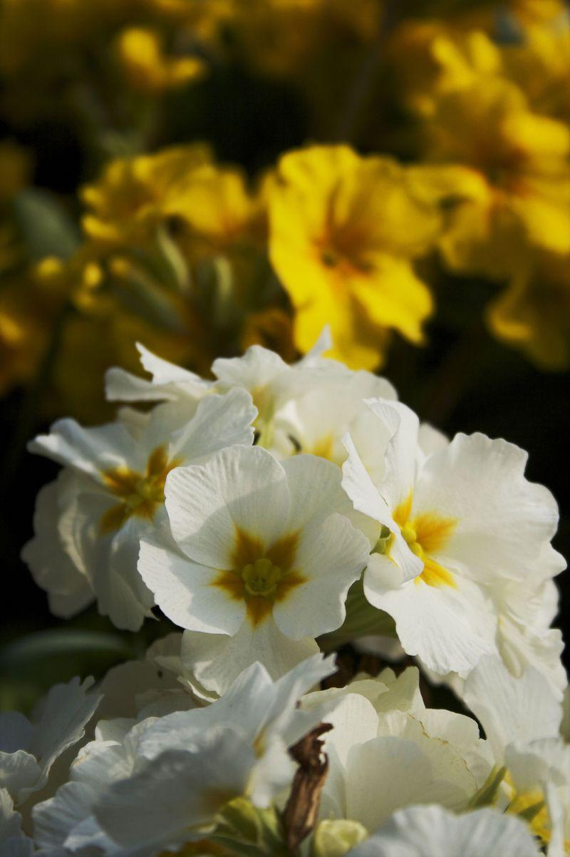 birmingham cannon hill park spring flowers