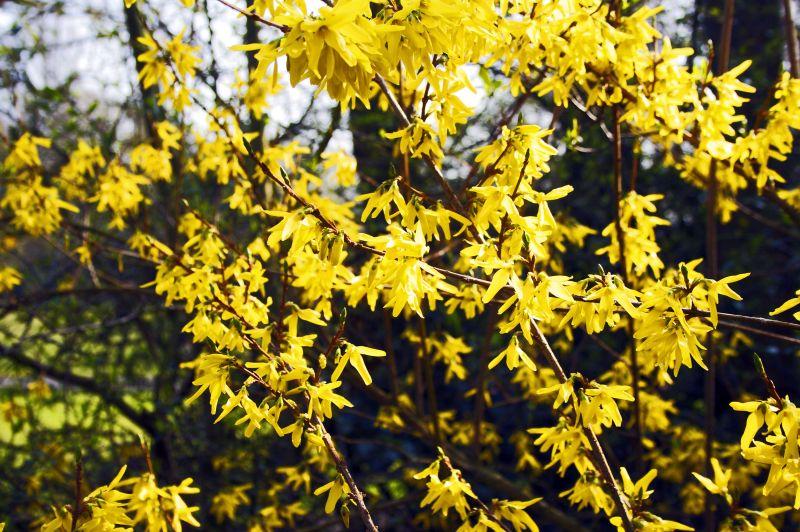 Cannon hill, park, birmingham, flowers, spring