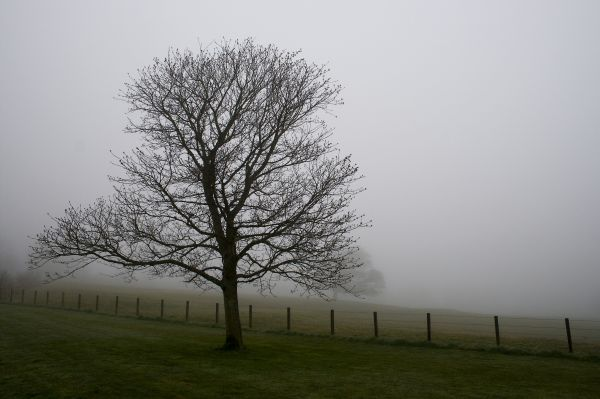 Tree, Scotland, Duns