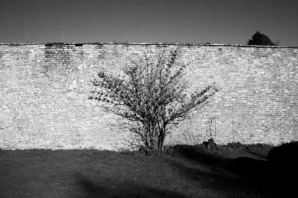 Wall fruit tree, scotland travel