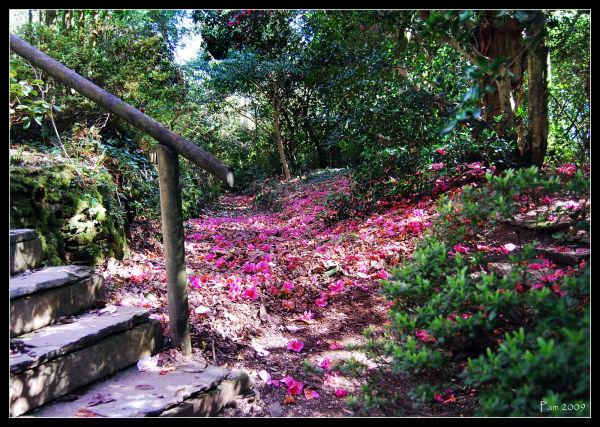 fallen magnolia