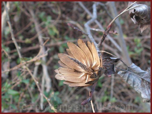 Dead Flower II