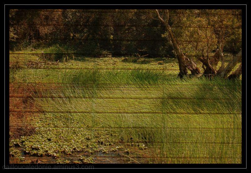 Image texturée d'un étang