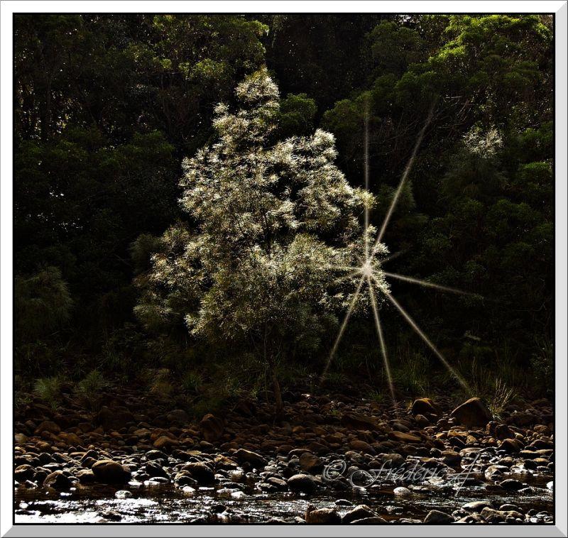 un arbre de lumière au bord de la rivière