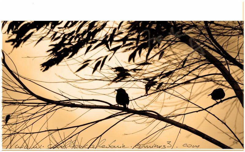 Oiseaux perchés en ombre chinoise