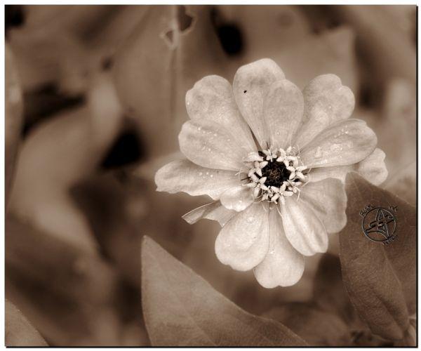 Fleur en Noir et Blanc