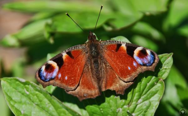 J' t'emmène à la chasse aux papillons...