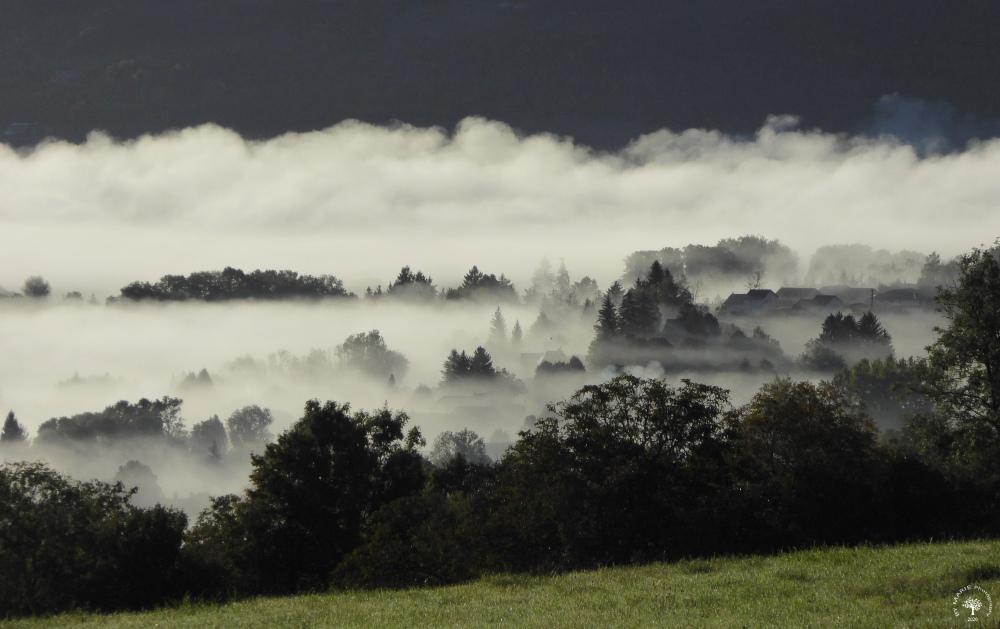 Brume matinale / Morning mist