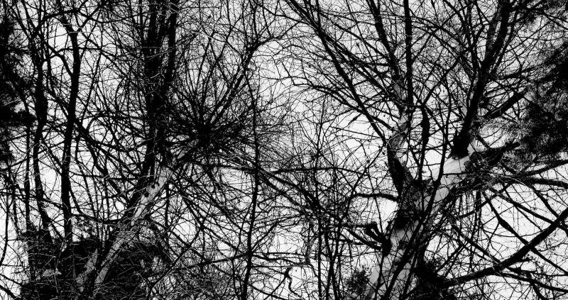 wild branches