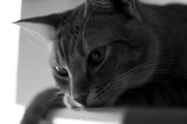 my gato
