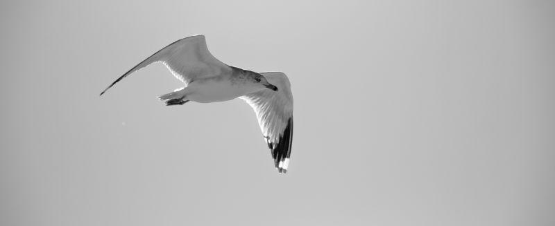 volador