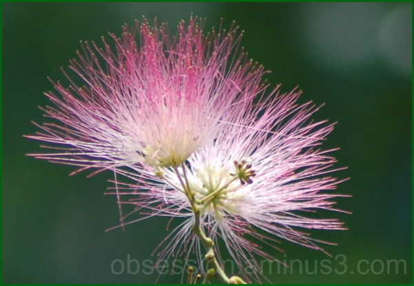 Non-Alcoholic Mimosa